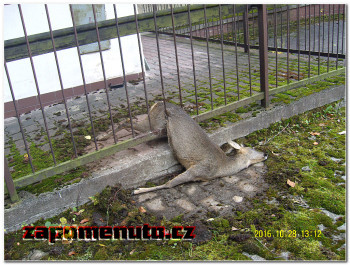 zapomenuto-cz-snv8409500072